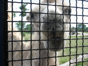 parco safari ravenna 2016 033